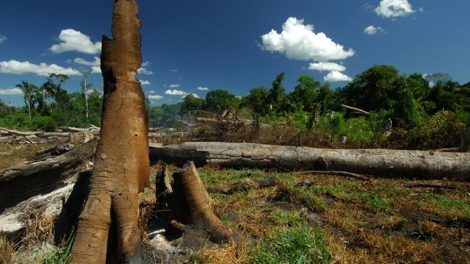 01_Waldzerstoerung_Brasilien_WWF.jpg