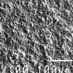 ADLER_Mikroskop_Moebellack.jpg