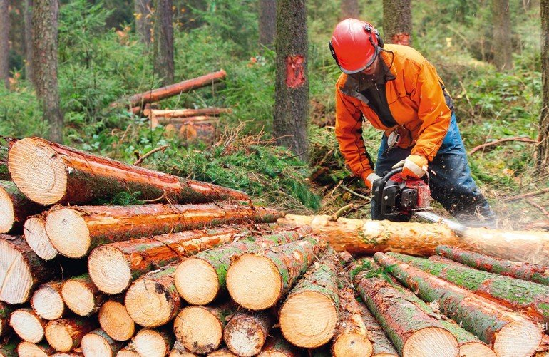 The_Lumberjack_working_in_a_forest._