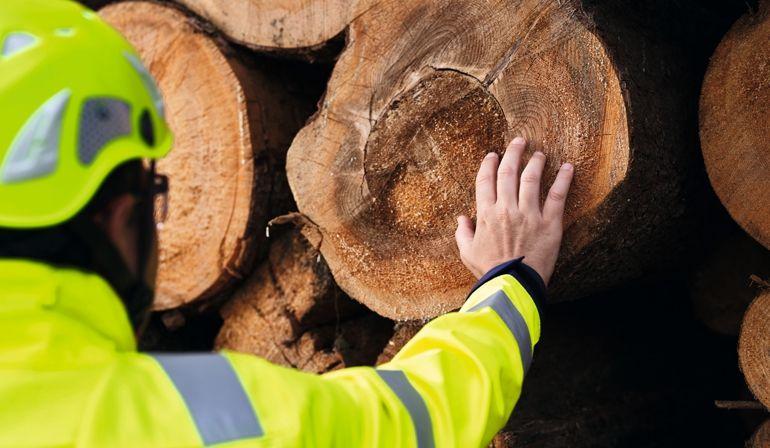 SJO_St._Johann_St_Johann;nature;plants;log_yard;men;roundwood;sustainability_SJO_St._Johann_St_Johann;nature;plants;log_yard;men;roundwood;sustainability