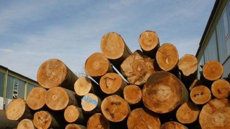 HDH_Holzindustrie_Umsatz_2019.jpg