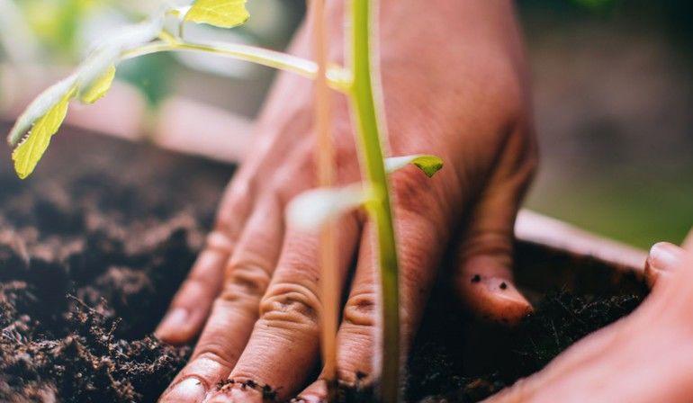 Nachhaltigkeit_web.jpg